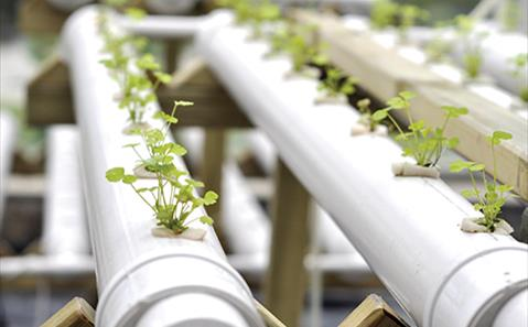 modern agriculture - plants on pipes